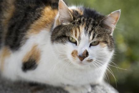 calico cat: Adorable street cat