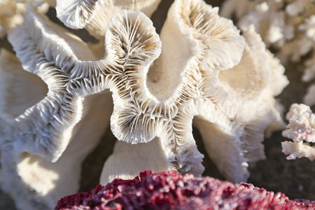 Coral detail texture photo