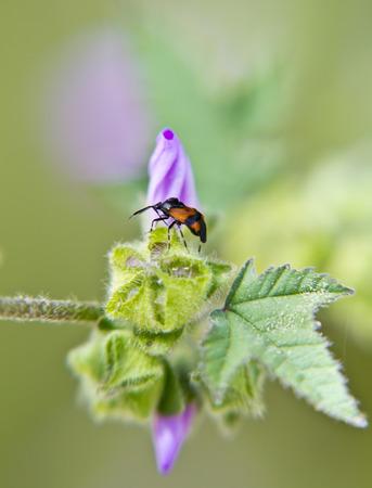 Little bug on a plant photo