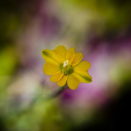 Tiny yellow flower photo