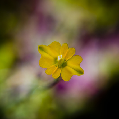 Tiny yellow flower Stock Photo