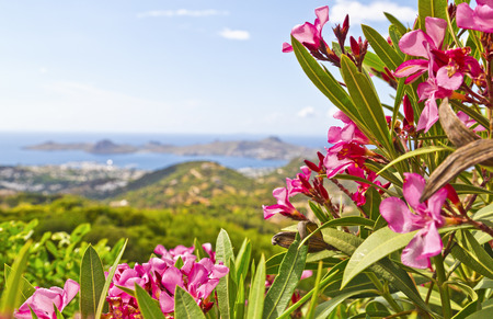 bougainvillea: Bodrum, Turkey - Beautiful view from the popular holiday destination in spring time Stock Photo