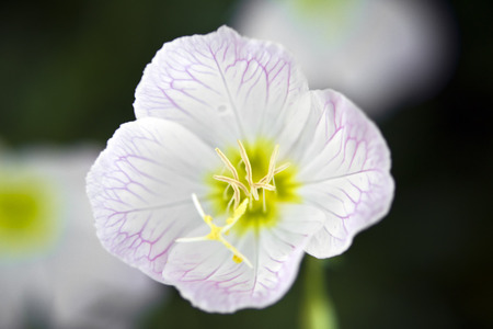 White spring flower photo
