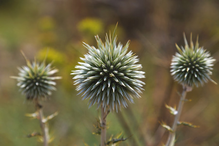 trees with thorns: Thistle