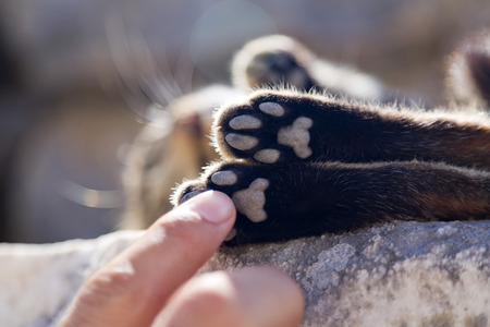 Man s finger touching a sleeping cat s paw photo