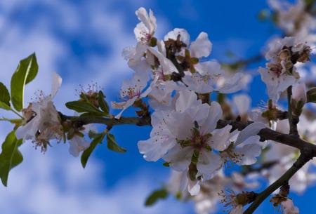 Spring flower twigs photo