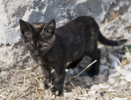 Sweet young black cat photo