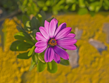 Purple flower on the sidewalk photo