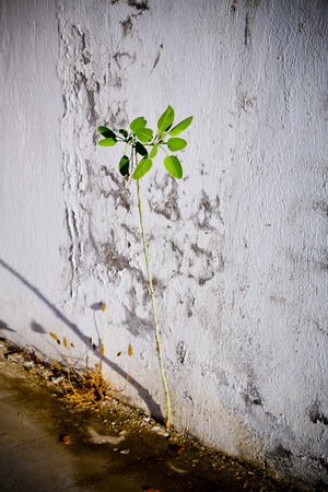 growing inside: Plant growing inside an abandoned interior