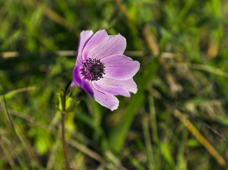 unity small flower: Purple wild flower Stock Photo
