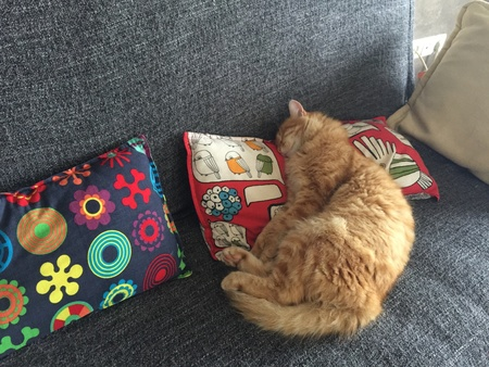 pillows: Yellow cat sleeping on the couch Stock Photo