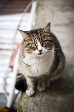 frisky: Cute homeless cat