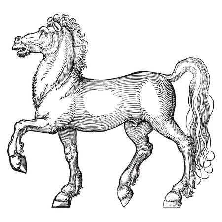 signle: Ancient style engraving of a signle horse isolated on white