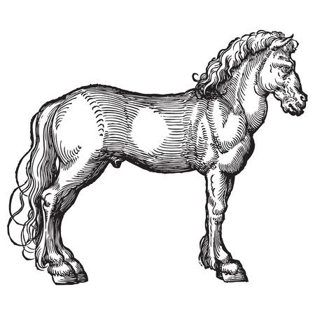 ephemera: Ancient style engraving of a single horse isolated on white