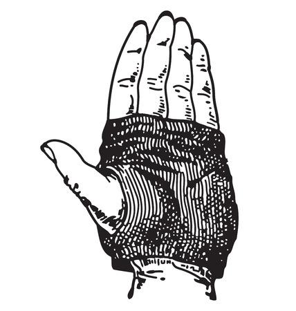 biking glove: Vector engraving of a single hand wearing a biking glove Illustration