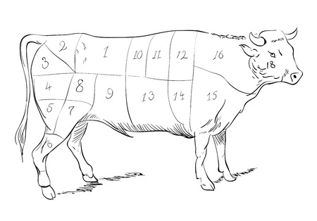 raw beef: Vector drawing of a beef with cutting parts Illustration