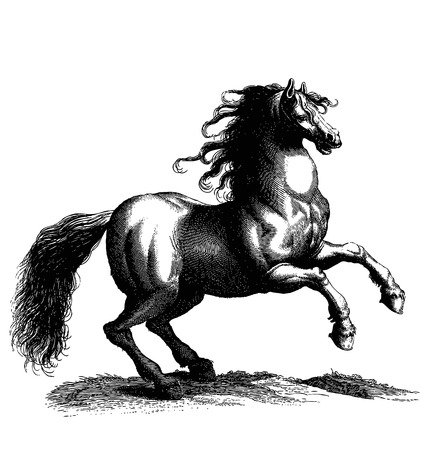 old horse: Vintage style vector hand drawing sketch of a horse Illustration
