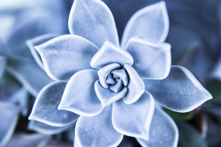 Succulent plant close up