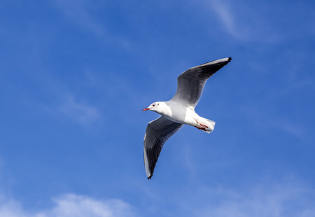 way out: Seagull flying in the sky