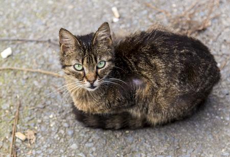 Cute street cat Stock Photo - 80302366
