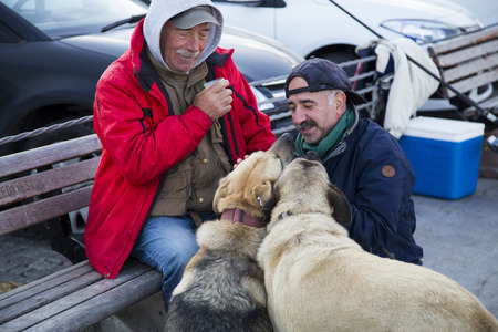 half breed: Istanbul Turkey  May 22 2015: People of Istanbul the homeless especially feed and take care of the abandoned street dogs. Taken in Arnavutkoy coastline Istanbul on May 22nd 2015.