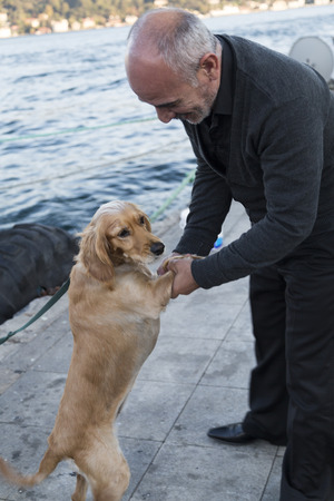 obey: Istanbul Turkey  May 22 2015: People of Istanbul the homeless especially feed and take care of the abandoned street dogs. Taken in Arnavutkoy coastline Istanbul on May 22nd 2015.