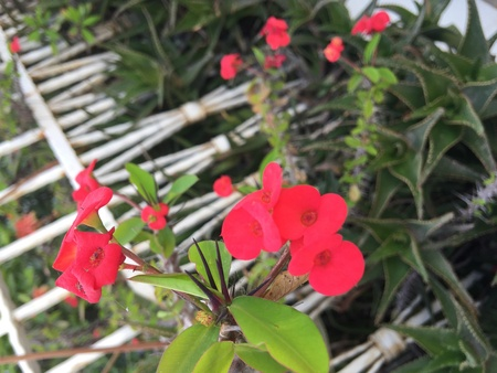 flower thorns: Pink flower with thorns