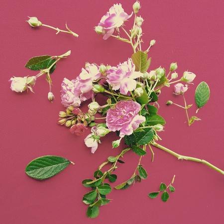 aqua: Pink Rose Organic Pattern