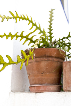 submersion: Succulent in a terracotta conitaner Stock Photo