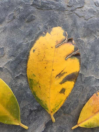color: Fallen leaves on the ground