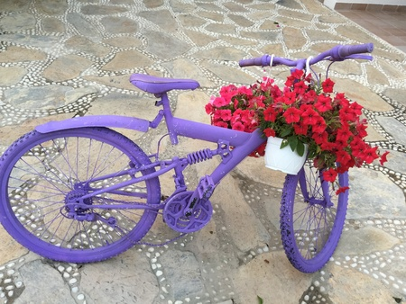 decorative item: Old purple panted bike reused as a decorative item with red and pink begonia flowers Stock Photo