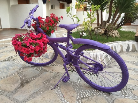 color: Old purple panted bike reused as a decorative item with red and pink begonia flowers Stock Photo