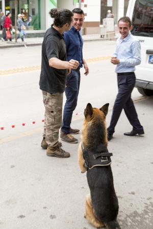 perro policia: perro policía K9 con la policía turca officersin Yalova, Turquía