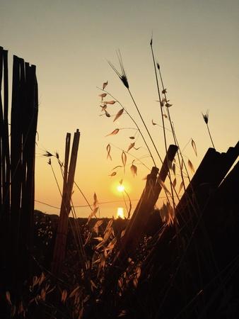 fence: Sunset in Gumusluk, Bodrum, Turkey