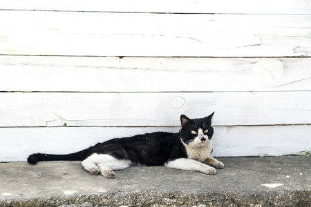 crafty: Black and white street cat in the street