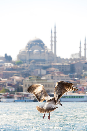Seagulls flying over Hagia Sophia and Sultanahmet, Istanbul