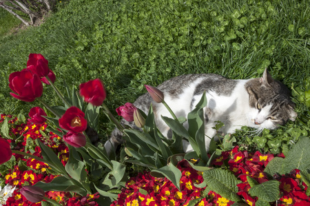 cultivating: Cat lying in flowers Stock Photo