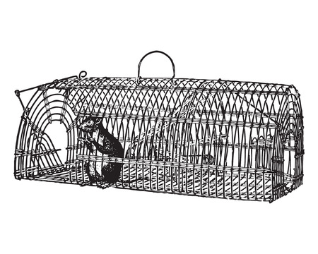 strikken: Engraving of a rat trapped in a wire snare