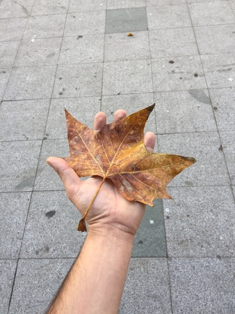 urban: Autumn leaf in the hand