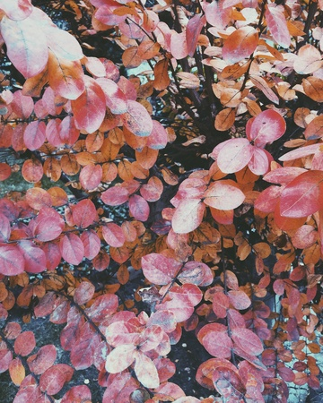 up: Autumn leaves