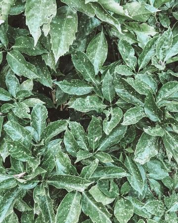 folio: Foliage texture background