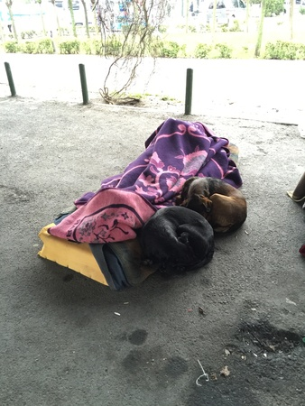 man: Homeless man and two dogs sleeping outside in Besiktas, Istanbul