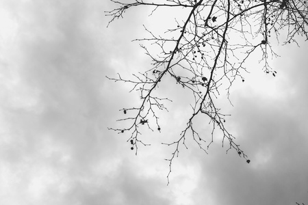 daunting: Barren tree branches against overcast sky