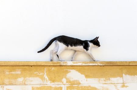 cute bi: Cute street cat