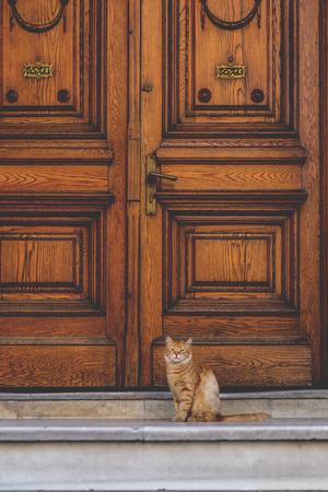 ornate door: Cute street cat sitting in front of an old wooden ornate door