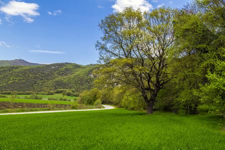 llanura: paisaje prado verde en la primavera de la localidad de Burcun cerca de la ciudad de Bursa Yenisehir en provincia de Turquía