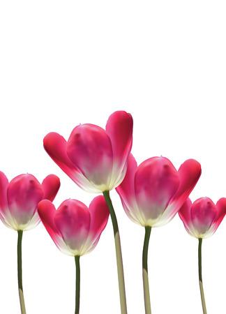 Flores de tulipán vector 3D hiperrealistas, totalmente editable y primavera temático de la naturaleza ilustración con fondo blanco y copia espacio. Foto de archivo - 58390117