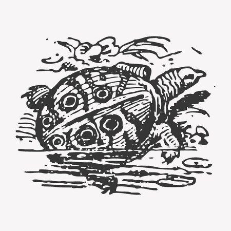 nile: Engraving Nile turtle (Trionyx triunguis), vintage fauna drawing Stock Photo