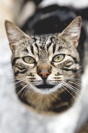 Cute street cat
