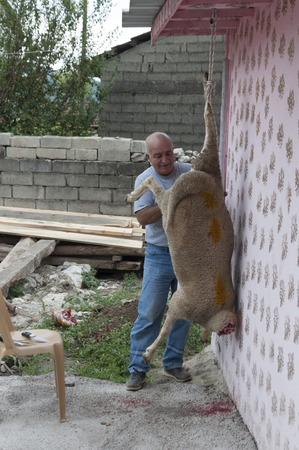 slaughtering: Burcun Village, Bursa, Turkey - September 12, 2016: Turkish people slaughtering and skinning a sheep in the backyard as a sacrificial practice in Eid al Adha, muslim holiday.